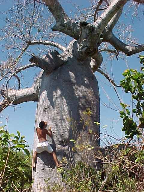 Baobab Session !!