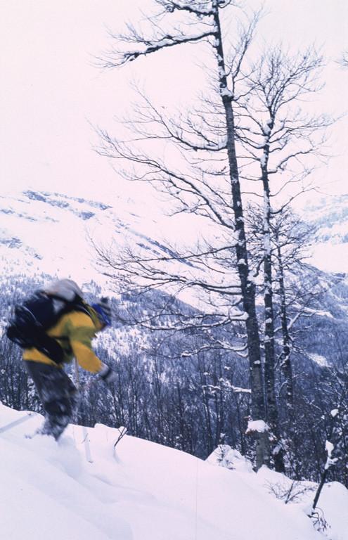 Dans la forêt, Ben en action