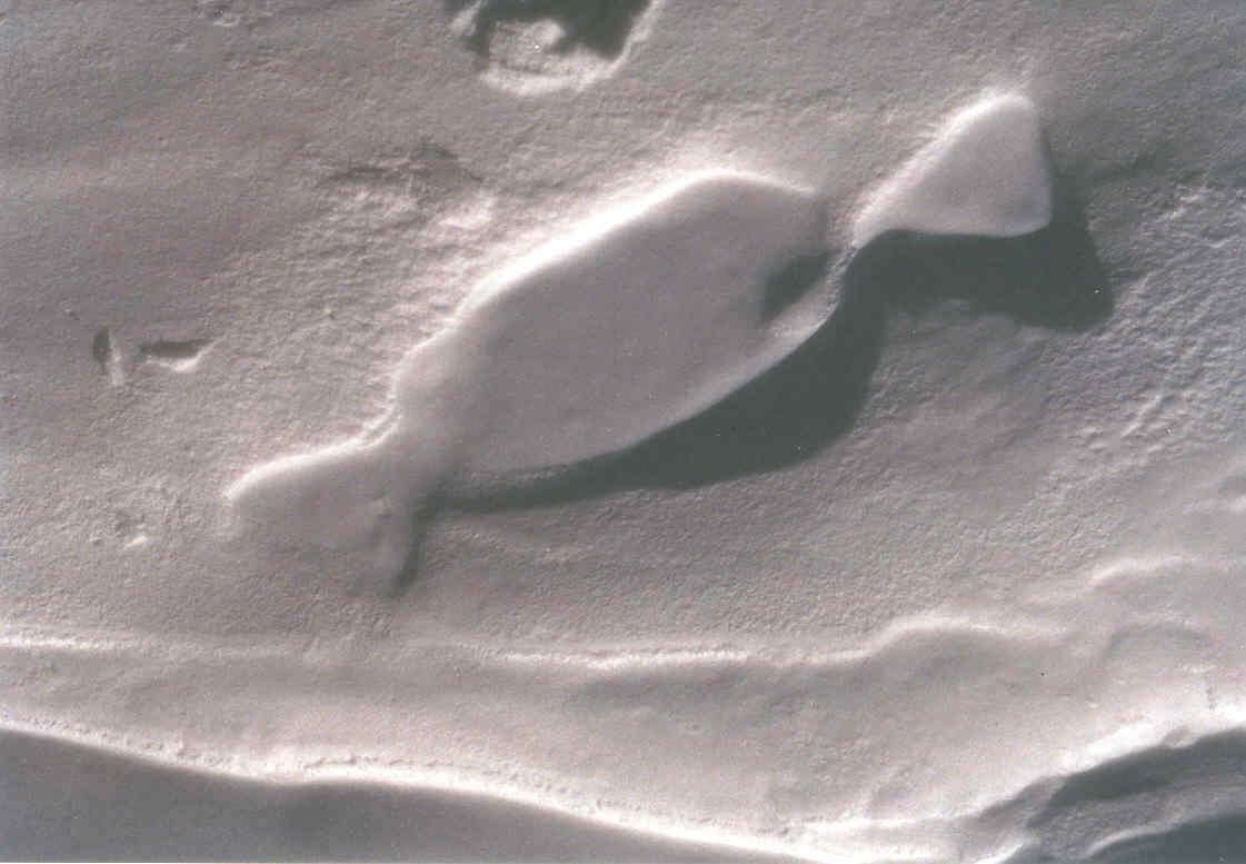 Etrange formation de neige