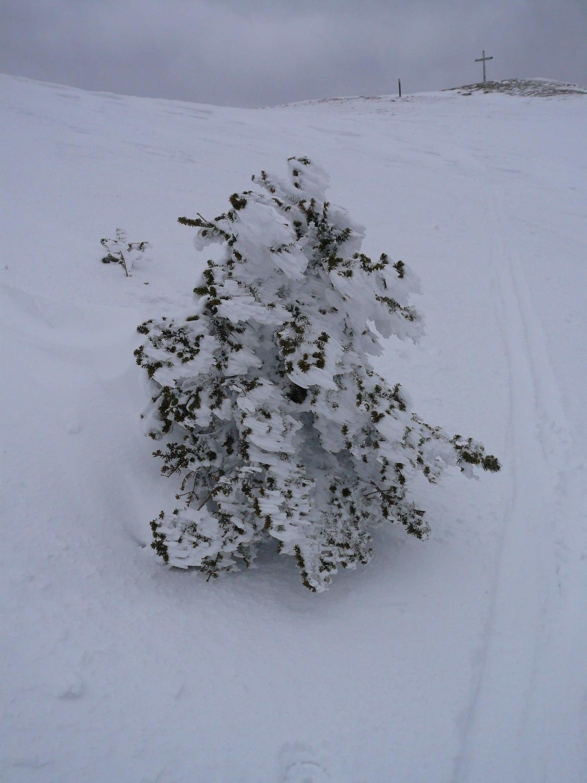 sapin chartrousin: la coupe tendance du printemps