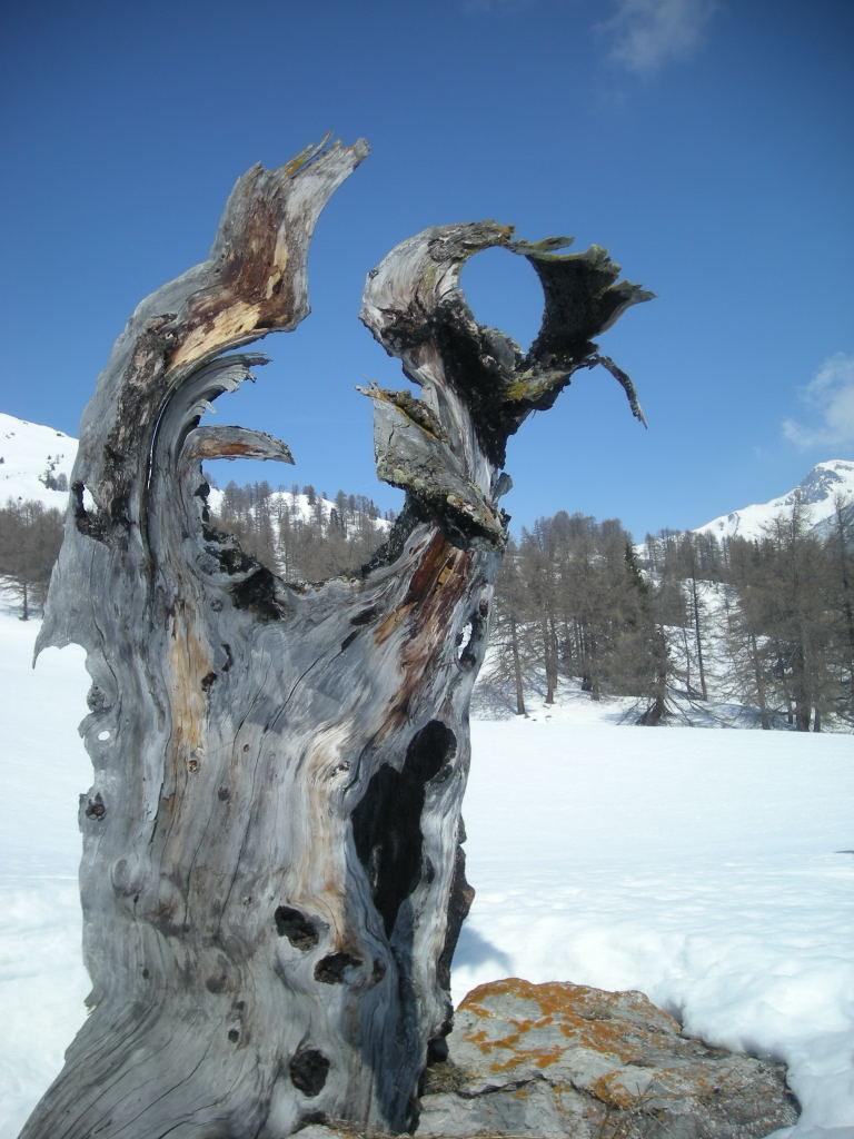 Un beau tronc d'arbre