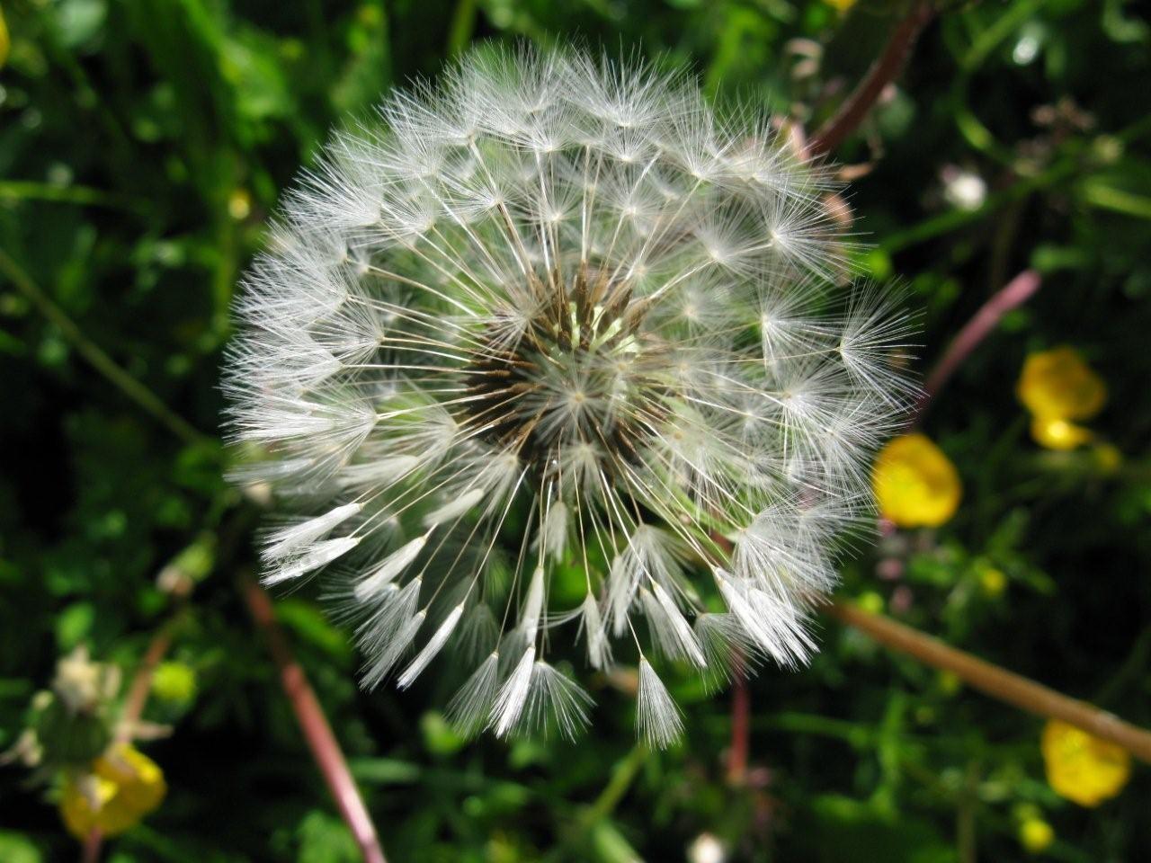 flocon en fleur
