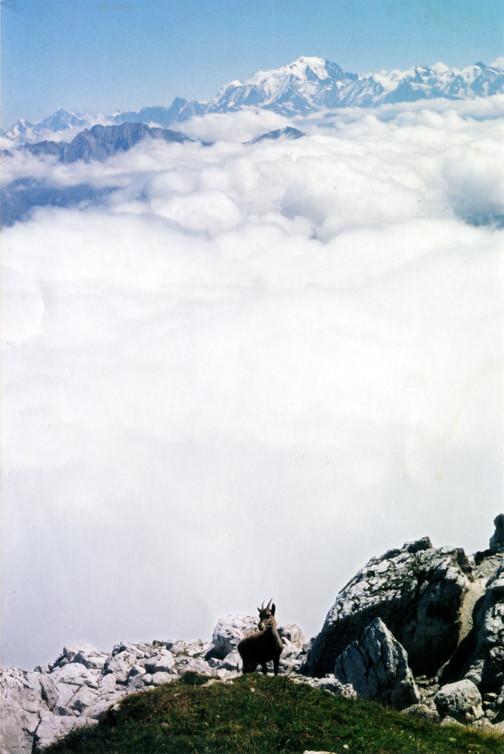 Mont Blanc vu de la Tournette