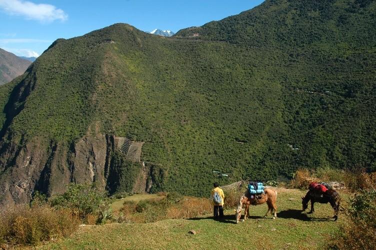 Les mules, le muletier Juan, à Marampata