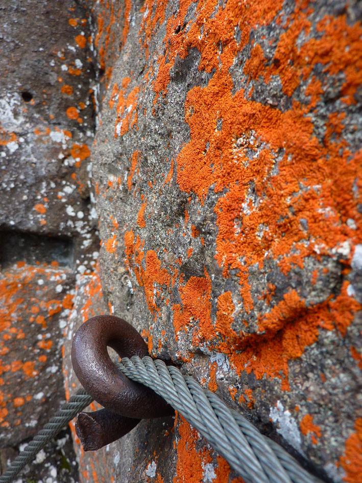 Zoom sur le lichen qui a mangé trop de carottes qd il était petit