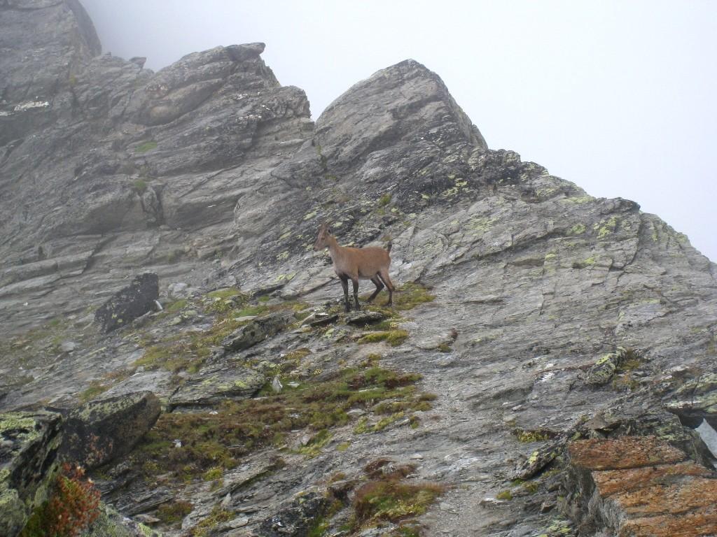 Au pied du sommet principal, Bréona file sur les dalles inclinées avec une aisance déconcertante!