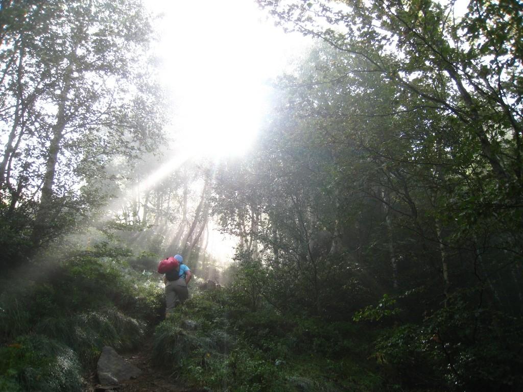 Le soleil joue avec les arbres et mon Etoile!