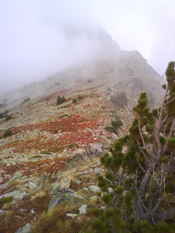 Les myrtilles virent au rouge mais sont encore là (et moi trempée mais j'étais plus à ça près ...)