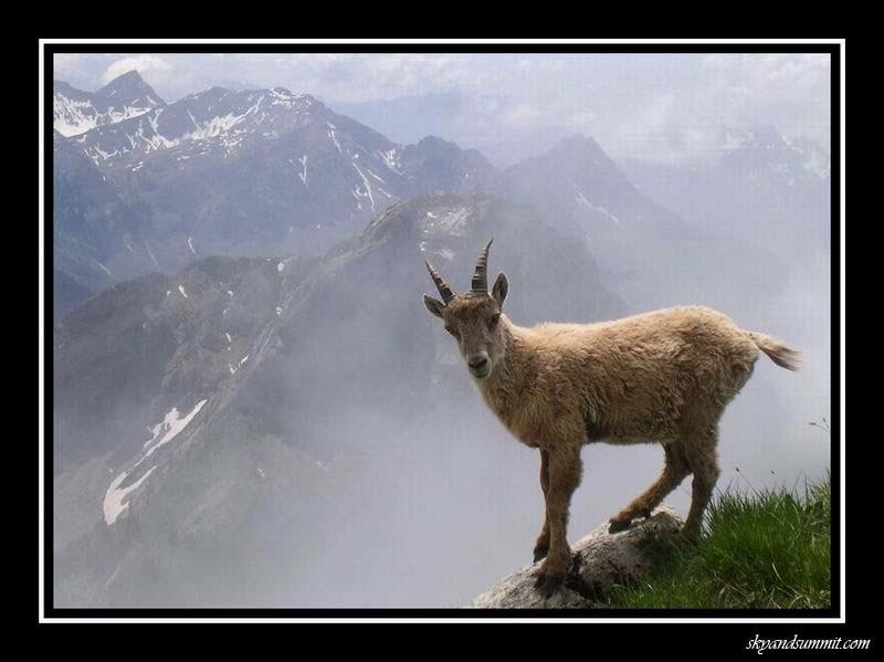 Peluche des Alpes