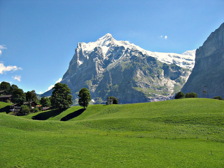 Wetterhorn and a perfect swiss grass