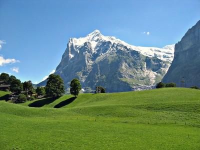 Wetterhorn and a perfect swiss grass