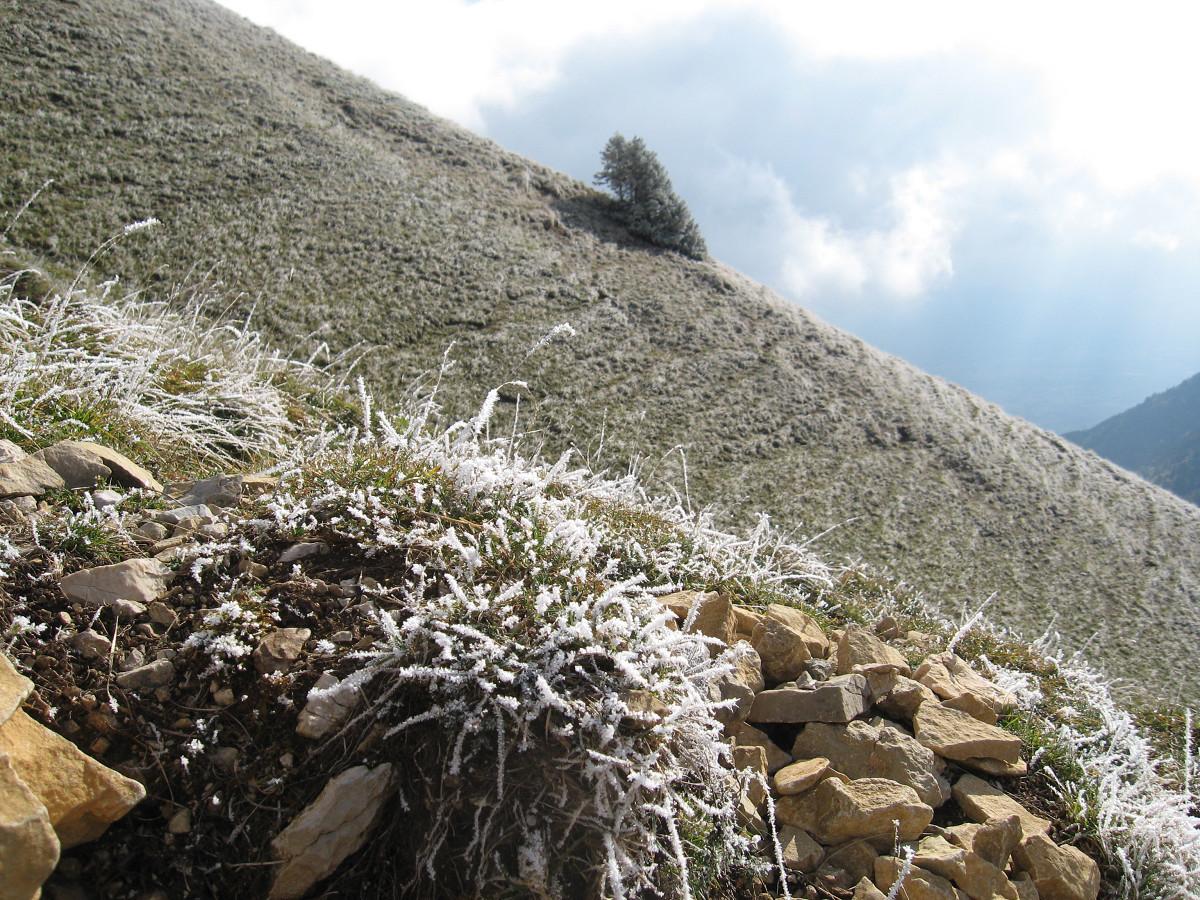 Dent de Crolles - Pilier S : A la descente, vers le col des Ayes, il est 15h, et les herbes ont conservé leur gelée du matin.