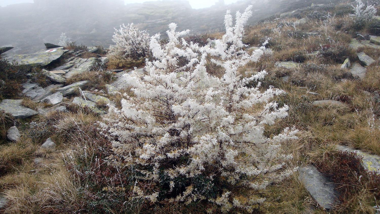 Givre de brouillard sur Ribia