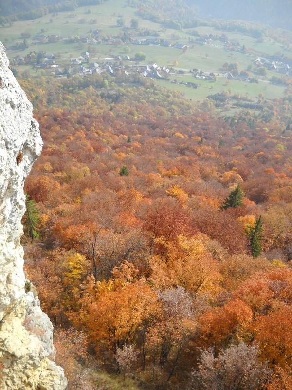 Belle forêt d'automne depuis R1