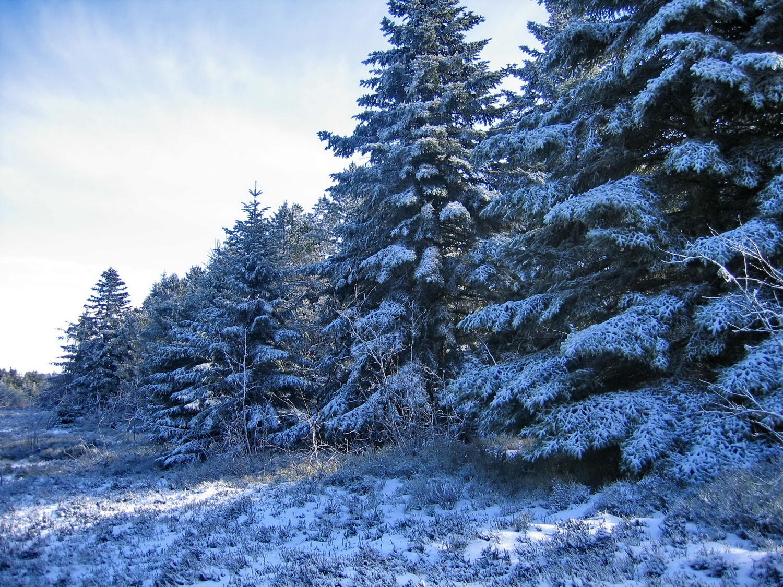 premiére neige 2009-10 au pilat