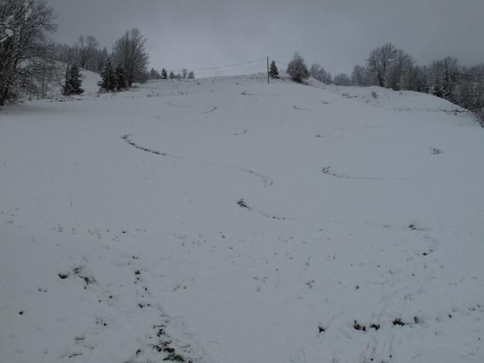 Fin de la descente (neige ou herbe?)