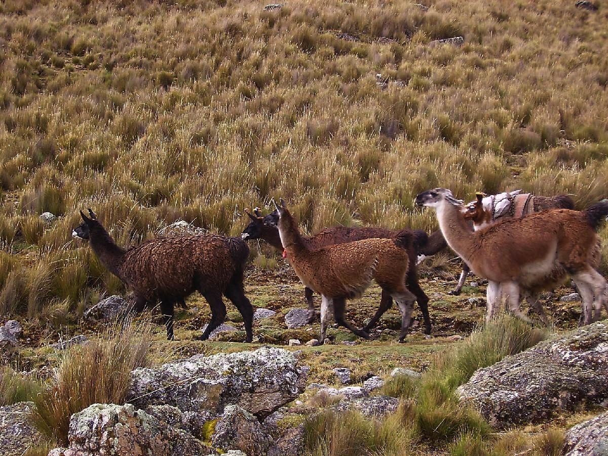 Sur le Tour de Huayhuash
