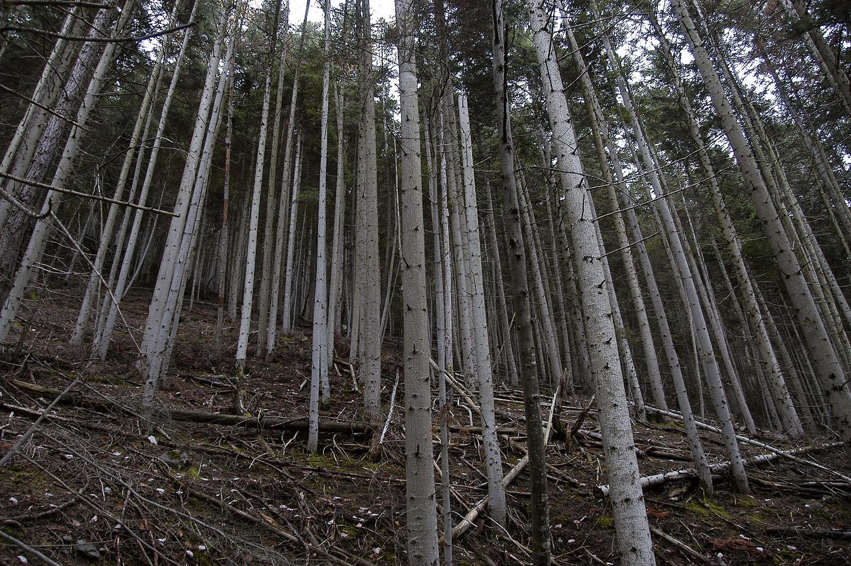 Belle forêt...