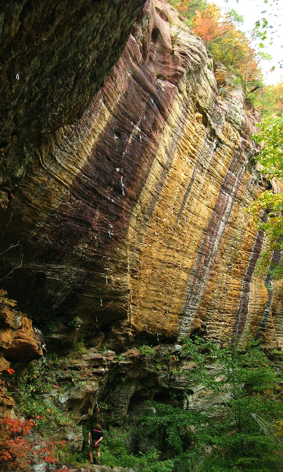 Gold Coast, Red River Gorge, USA