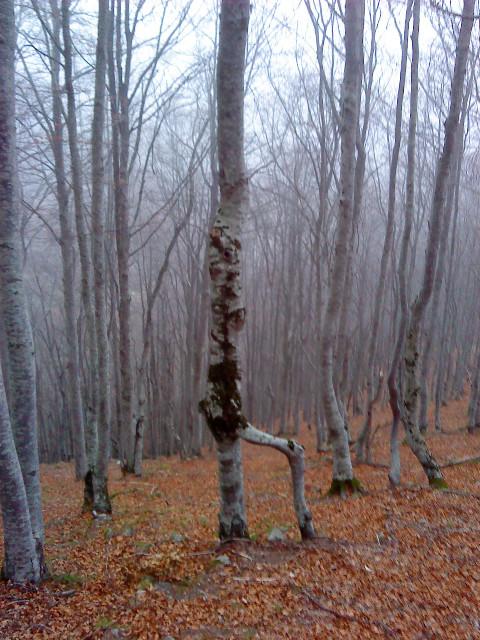 L'arbre attend