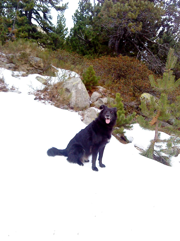 Flica in the neige