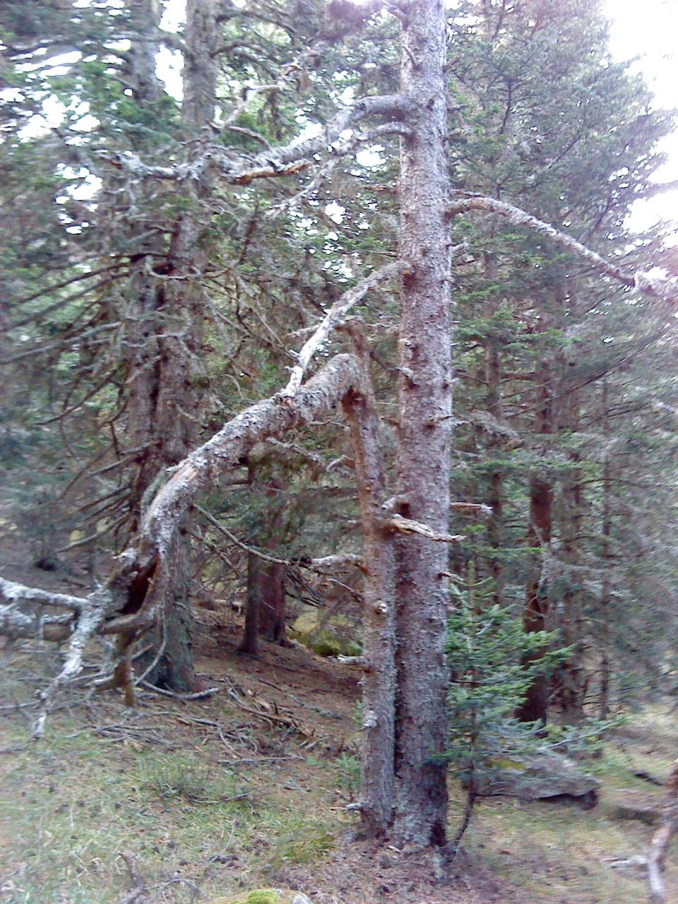 Les dégats de la tempête de janvier 2009