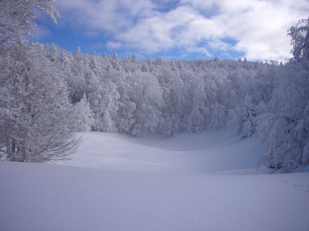 encore des arbres et de la neige