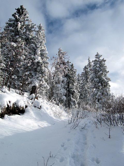 Dans la forêt, ça passe si des arbres autour n'ont pas reçu toute la neige...