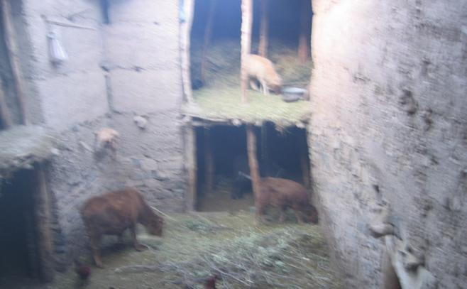 Ikkis - maison des nomades