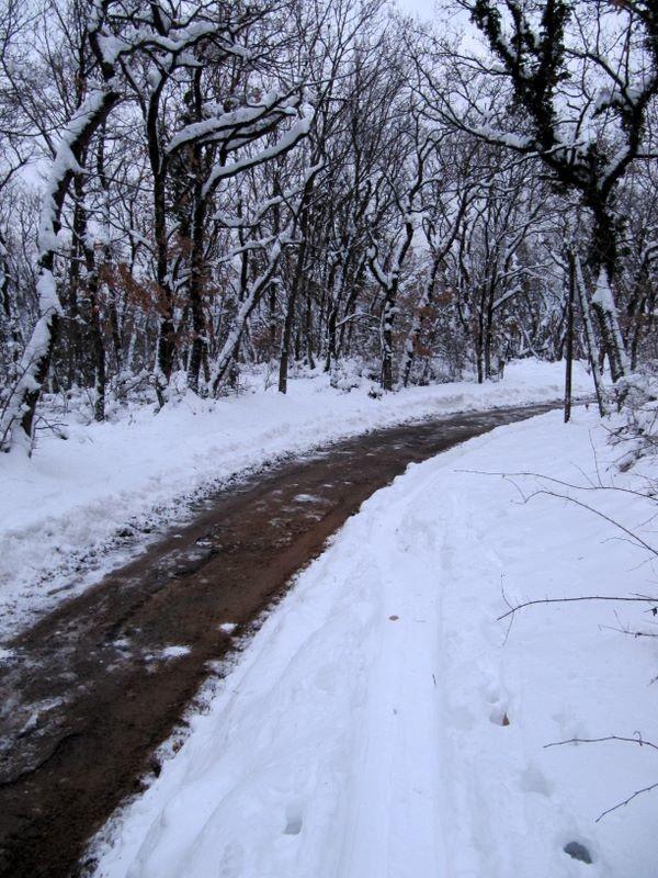 Le long de la route au dessus des Vouillants : une trace se poursuit miraculeusement le long de la route !