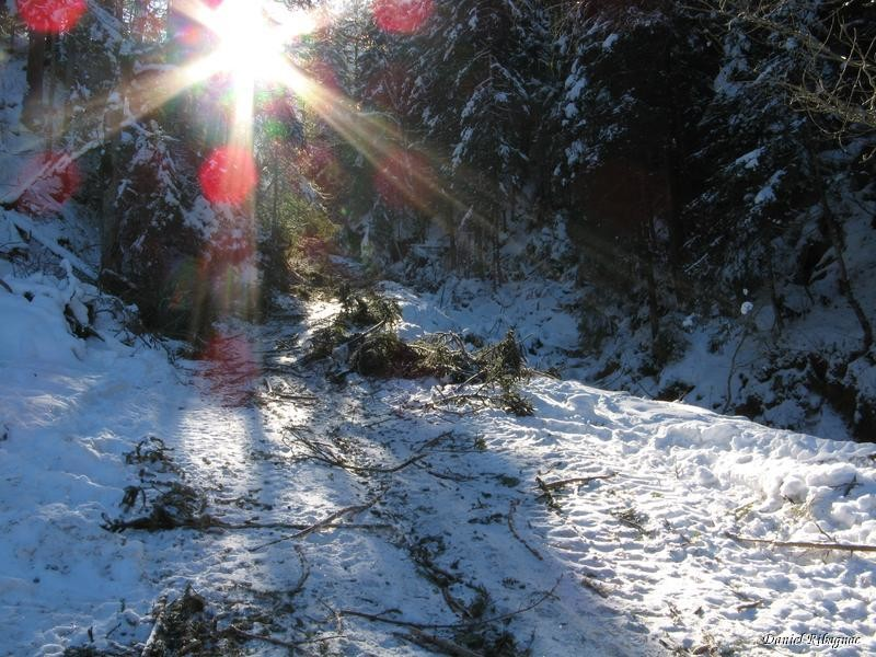 Pour cause de travaux forestiers, il a fallu marcher depuis 1200m