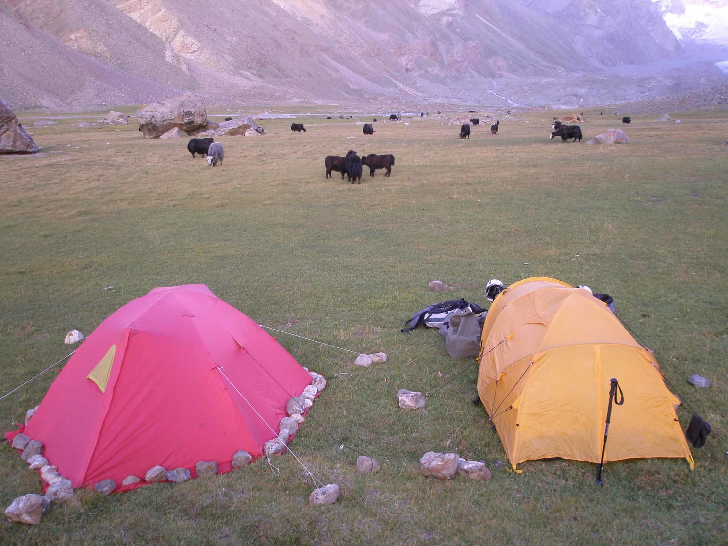 camp de base et yaks