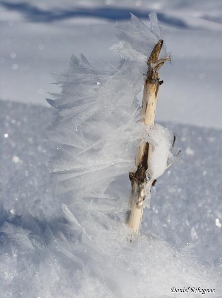 Dans le vallon de Savalène, sculpture du vent