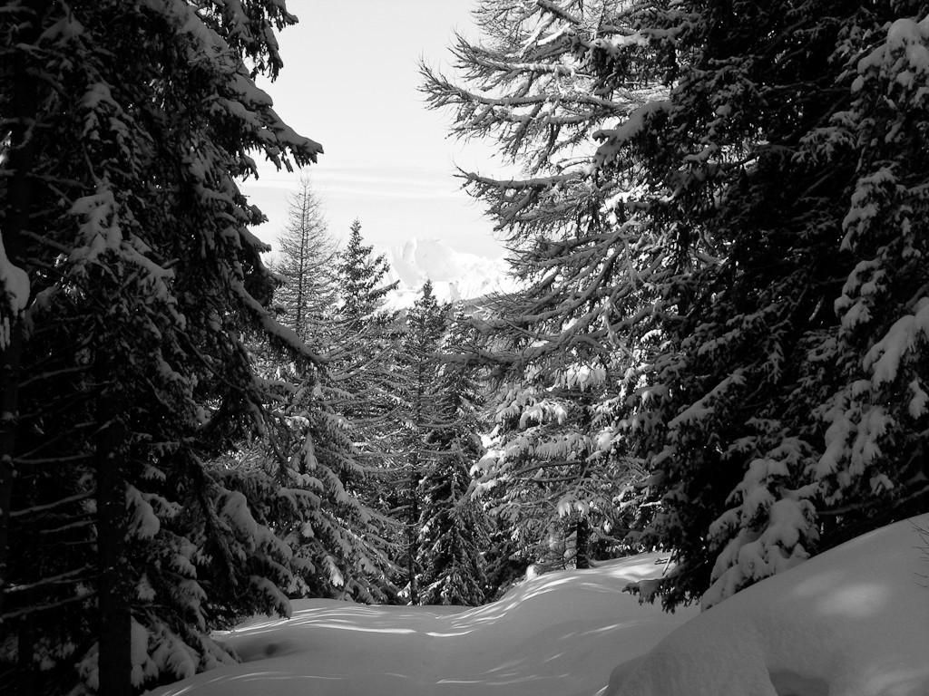 Forêt magique...