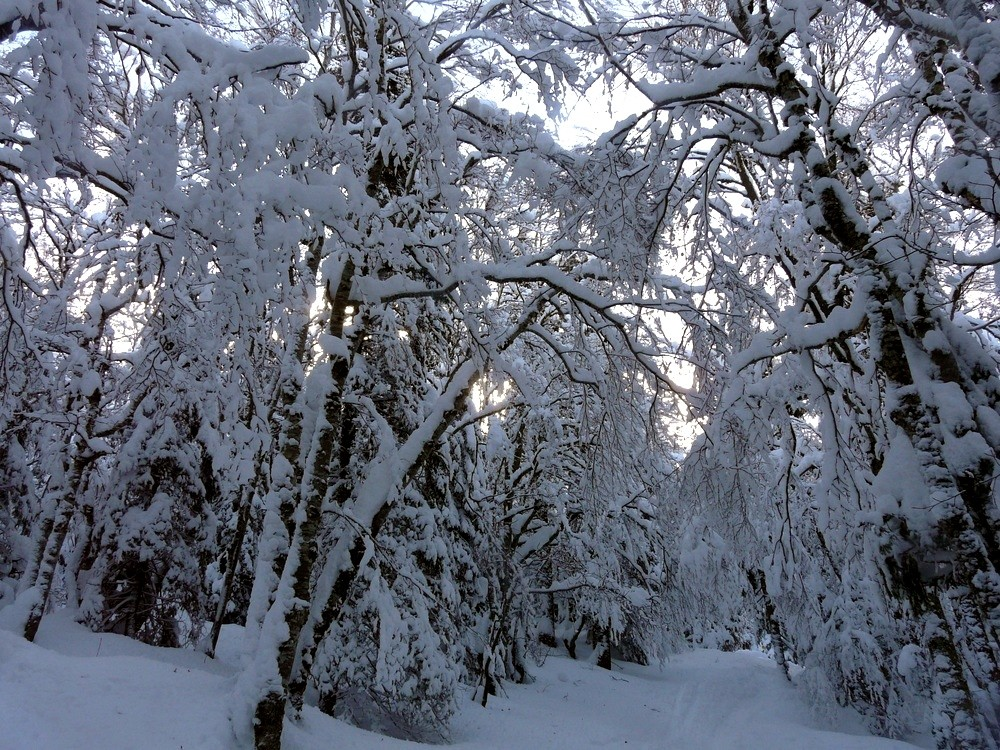Dans la forêt de Brillonnes