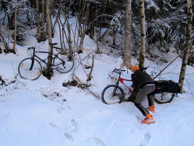Il pousse des vélos au pied des arbres en Chatreuse...