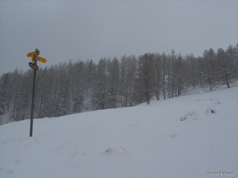 Létemaire sous la neige