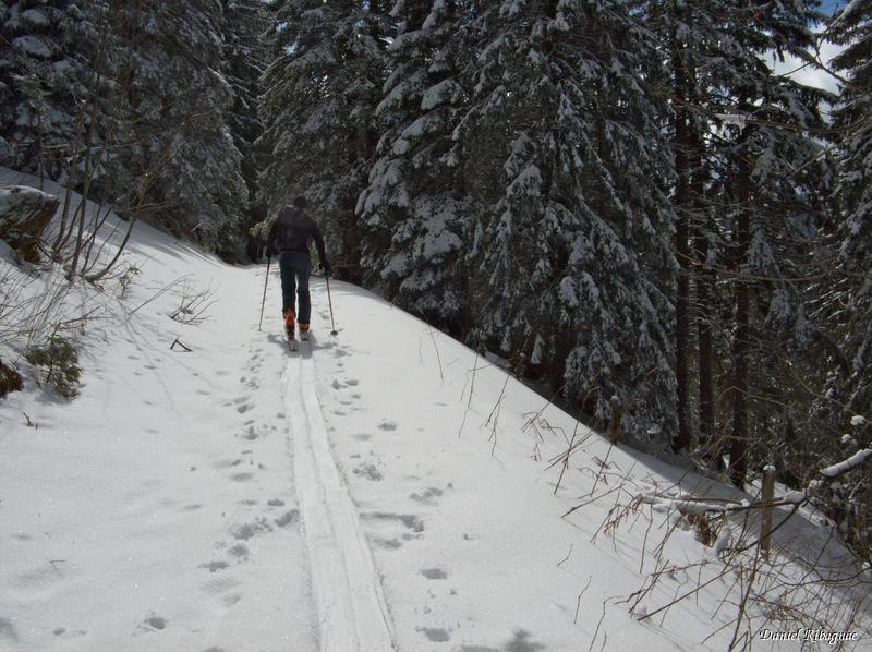 Chemin forestier entre Le Sollier et Le Cochet