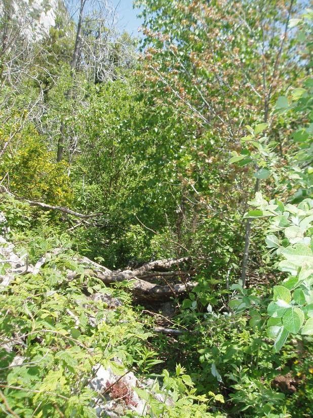 chemin après la première bosse.... bcp de végétation...