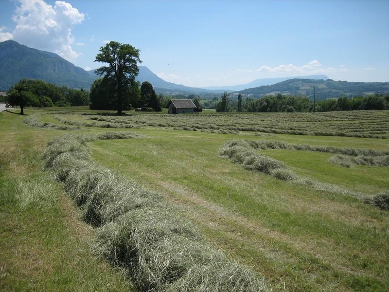 Hum, l'odeur de l'herbe fraîchement coupée