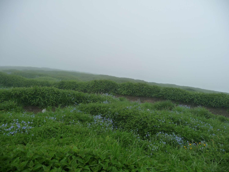 brouillard au sommet, couvert d'orties
