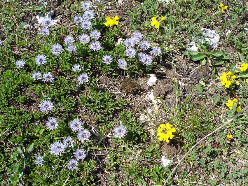 petites fleurs du printemps