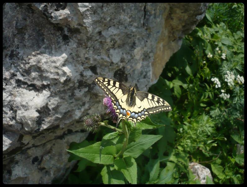 Nature luxuriante dans la gorge en contrebas