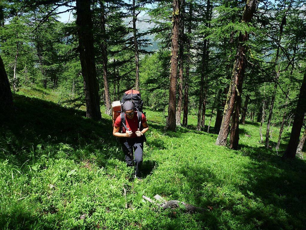 Montée hors sentier dans la belle forêt de Marassan