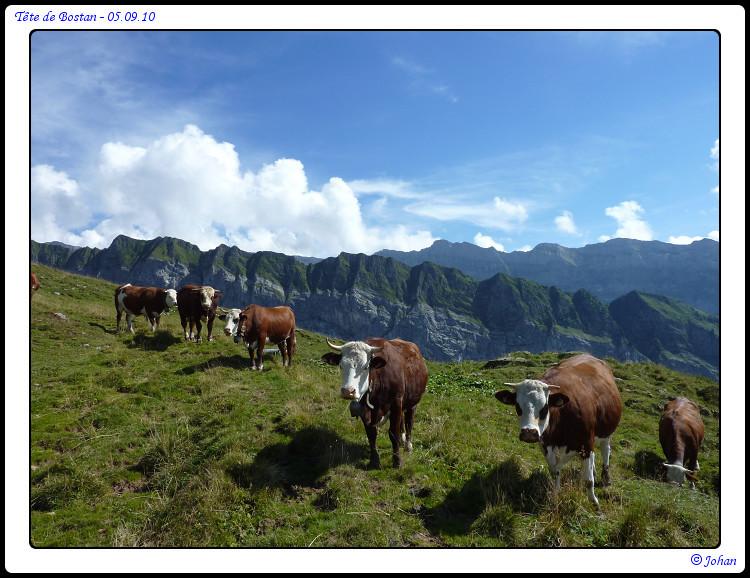 Pas mal de vaches (et de moutons), devant ce beau paysage