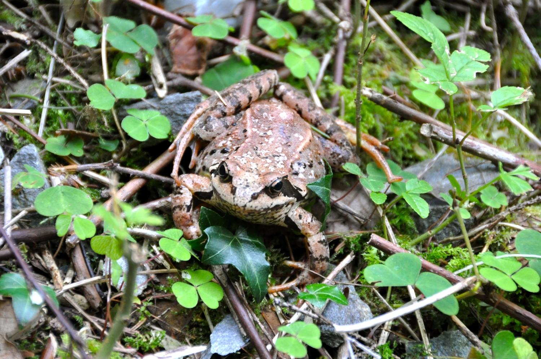 Riederu: sentier des grenouilles.