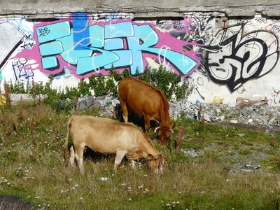 Vaches andorranes