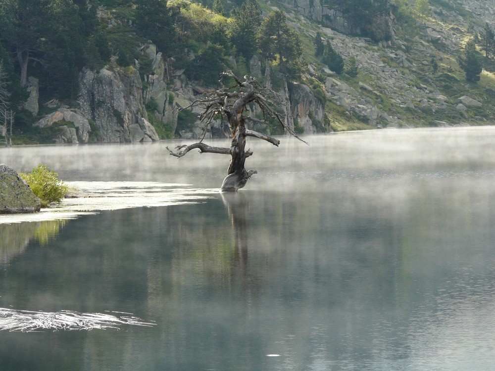 Arbre mort sur le lac de Baix de Baciver