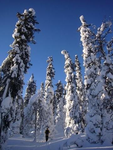 Telemark en Laponie