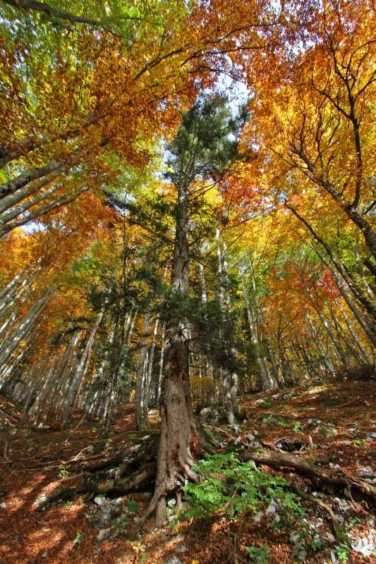Sa majesté des bois